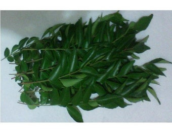 Leaves or Stems Organic Indian Curry (Kari Patta) NOT A PLANT, Home Grown in Texas