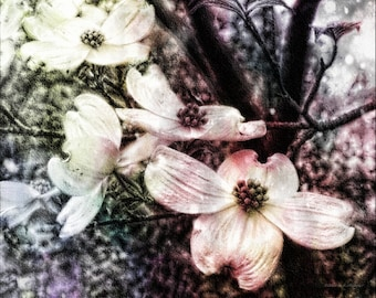 Surreal Fantasy Nature Dogwood Blooms Fantasy Woodland Whites Pastels Flower Fine Art Photography Print or Gallery Canvas Wrap Giclee