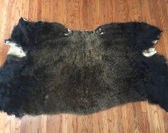 Taxidermy Bison Hide Rug