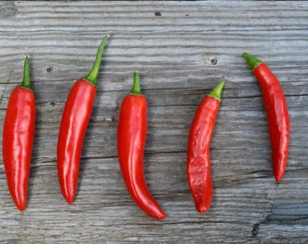 Onza Pepper Seed,  Chile Peppers, Hot Pepper Seeds, Onza Roja Pepper, Non GMO Seeds