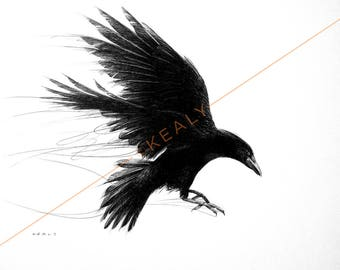 Crow Drawing Print – Black and White