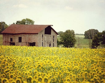 Sunflowers & Barn Picture, Rustic Landscape Photography, Farm Country Yellow Green Farmhouse Fixer Upper Style Home Decor Wall Art
