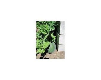 5 Bush Watermelon Seeds-1170