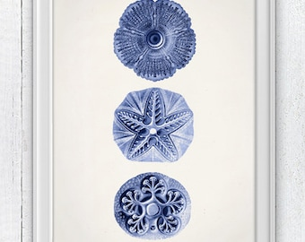 Jellyfish Cistoidea 06 in blue - Wall decor poster ,  sea life print -Marine  sea life illustration A4 print SAS109