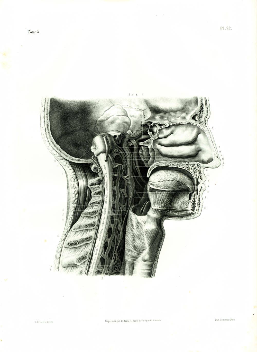 Beste Passende Anatomie Integumentary System Antworten Ideen ...