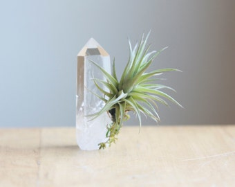 Air Plant on Quartz Crystal Point, Unique Airplant Display, Gift For Friend, Gardener, Spiritual Gift, Tillandsia Lover, Under 20, Boho