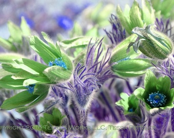 Green and Purple Garden 8x10 glossy print