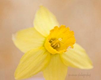Daffodil Photography, Yellow Flower Print, Daffodil Art, Yellow Flower Art, Yellow Nursery, Daffodil Print, Shabby Chic Art Square Print