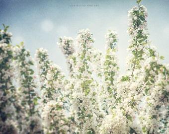 Nature Print or Canvas Art, Pastel Blue Sky White Flower Picture, White Cherry Blossoms, Flower Print, Spring Decorating.