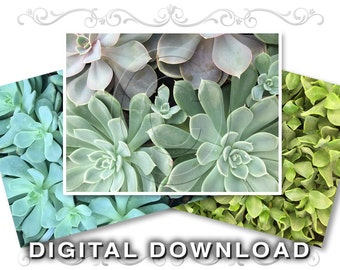 Succulent ClipArt Plants Photos | Texture Background Images | Instant Download | Small Business Commercial Use | Plants01 (0177b3v)