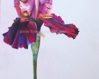 Red Velvet Iris