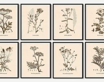 Print set, Botanical print set, Set of 8 prints, Wall art vintage, Wall art set, Botanical printable, Floral printable, Set of prints, JPGA3