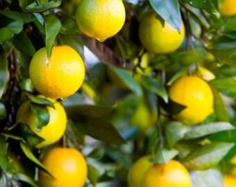 Organic Vegan Real Fruit Flavored Lemon Lip Balm