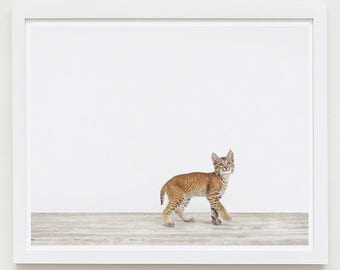 Baby Animal Nursery Art Print. Baby Bobcat. Animal Nursery Decor. Baby Animal Photo.