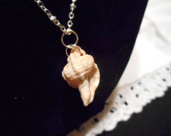 Small Cantharus Conch Shell Pendant on 925 Sterling Chain