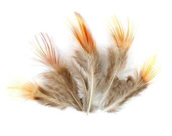 10 x small 4 to 8cm (78(f))) brown orange pheasant feather