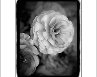 Ranunculus Print, Wall Decor Art Print,  Black and White Photography, Flower Photography