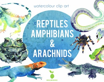 Watercolour Reptiles clipart, Amphibians, Snakes clipart, spiders clipart, Iguana, Toad, Lizards, Frogs, Crocodile clipart, Tarantula