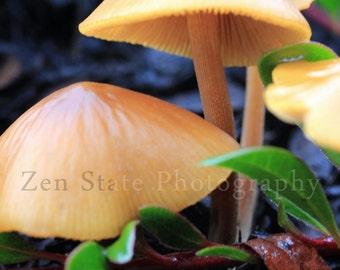 Mushroom Wall Art. Nature Photography Print. Mushroom Photography. Mushrooms Photo Print, Framed Photography, or Canvas Print. Home Decor.