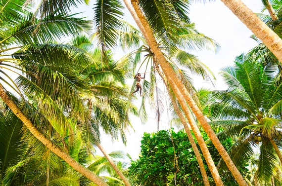 TREE MAN. Sri Lanka, Travel Photography, Limited Edition, Photographic Print, Palm Trees.