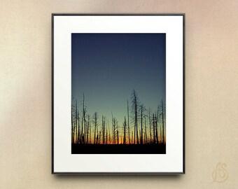 Grand Canyon Photography // Landscape Wall Decor // Kaibab National Forest // Grand Canyon National Park Arizona //  8x10 8x12 11x14
