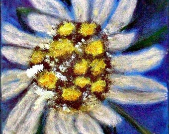 2017 # 54_Edelweiss-Mixed media painting-pastel chalk-acrylic paint-Still life-flower-nature-plant-noble white blossom-mixed media painting
