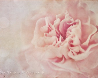 Floral Fotografie - Pink Dreams - Fine Art print - 8 x 12 - Romantische HÃ ¤ uschen chic weichen Pastellfarben rosa Elfenbein verträumt Blume Bokeh Wohnkultur