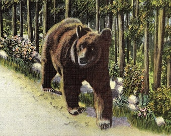 Grizzly Bears, Black Bears, Bears - Vintage Postcard - Postcard - Unused (III)