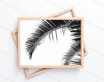 Byron Bay Palm Frond #2 |  Black & White Photographic Print (Print Only)