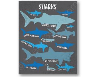 Sharks Poster Print, Kinds of Sharks Art, Shark Wall Art, Shark Gift, Shark Types Art, Shark Poster, Shark Lover Gift, Shark Canvas Art