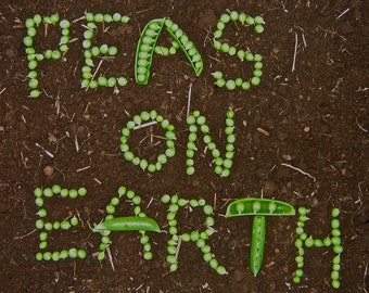 PEAS ON EARTH  greeting card Blank inside