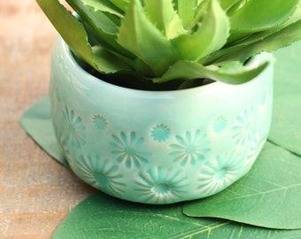 aqua plant container