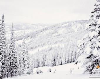 Snowy Trees in Steamboat Springs Pt. 3