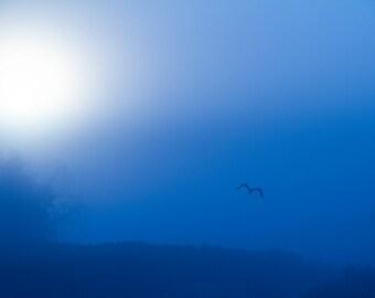 Morning Fog, Sunrise, Minimal, Heron flying, sunrise photography, sunrise art, The Blues