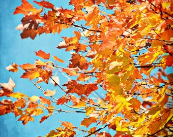 Autumn Nature Photography - October Skies - 8 x 10 fine art print - autumn leaves orange yellow gold turquoise blue sky sunny home decor