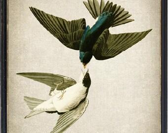 Bird Printable, White-bellied Swallows Vintage Illustration, Instant Wall Art Print, Digital Download