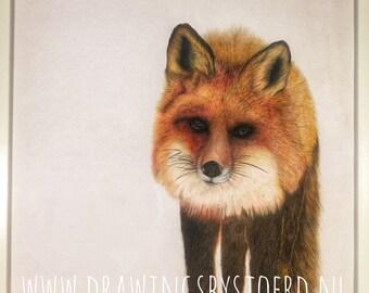 Fox II Print A3