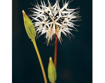 Büschel von Sternen - 5-Postkarten-Set