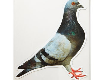 Large Pigeon Facing Right Photo Magnet
