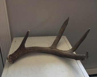 Large mule deer shed antler