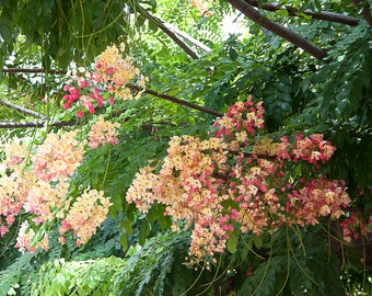 Hawaii - Eden - NATURE photo - tropical island, gardens - Fine art photography - spring blossoms, leaf green, fuchsia, pink, peach