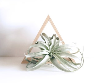 Stained Oak Wood Triangle Shelf, Geometric Shelving, Wall Decor, Housewarming Gift Idea, Holiday Gift, Candle Display, Air Plant Display