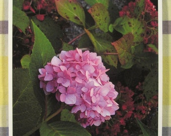 Endless Summer hydrangea blossom in fall, red - 8x8 inch print