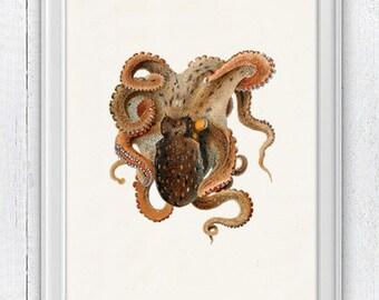 Vintage octopus n 26 - sea life print- Marine  sea life illustration A4 print- vintage natural history SAS175