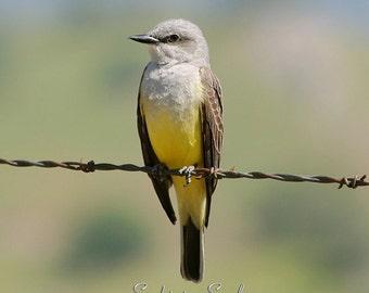 Yellow Bird Photography, Western Kingbird, Bird on a Wire, Nature Wall Art, Rustic Home Decor, Bird Lover Gifts, Fine Art Print