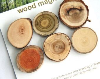 6 wood magnets - bright set - beech sumac cedar buckthorn elm ash - for home or office