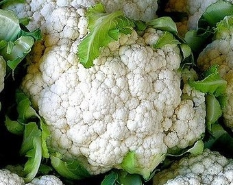 Cauliflower Seeds- Snowball Self-Blanching- 200+ Seeds