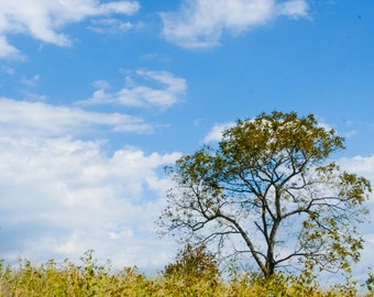Tree On Hill, Tree In Field Photo, Blue Sky Photo, Landscape Photo Art, 8x10 Photo, Framed Photography Option