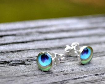 PEACOCK. Petite Photo post earrings. Sterling Silver.