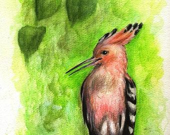Wiedehopf, Wildvögel, Natur, Tierwelt Kunst, Tiere, original Aquarell Bleistifte zeichnen